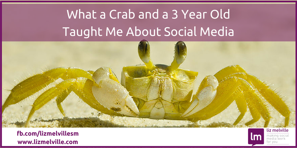 What a Crab and a 3 Year Old Taught Me About Using Social Media