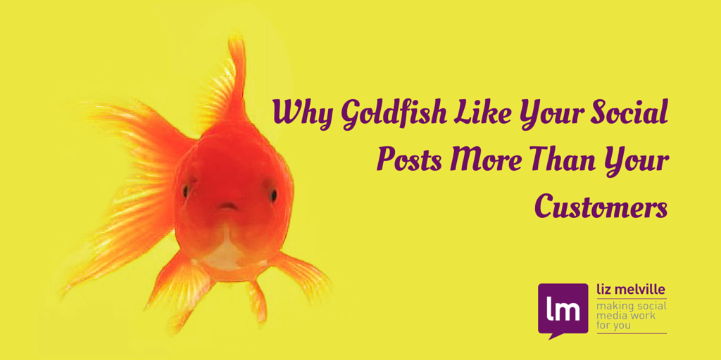 Why Goldfish Like Your Social Posts More Than Your Customers